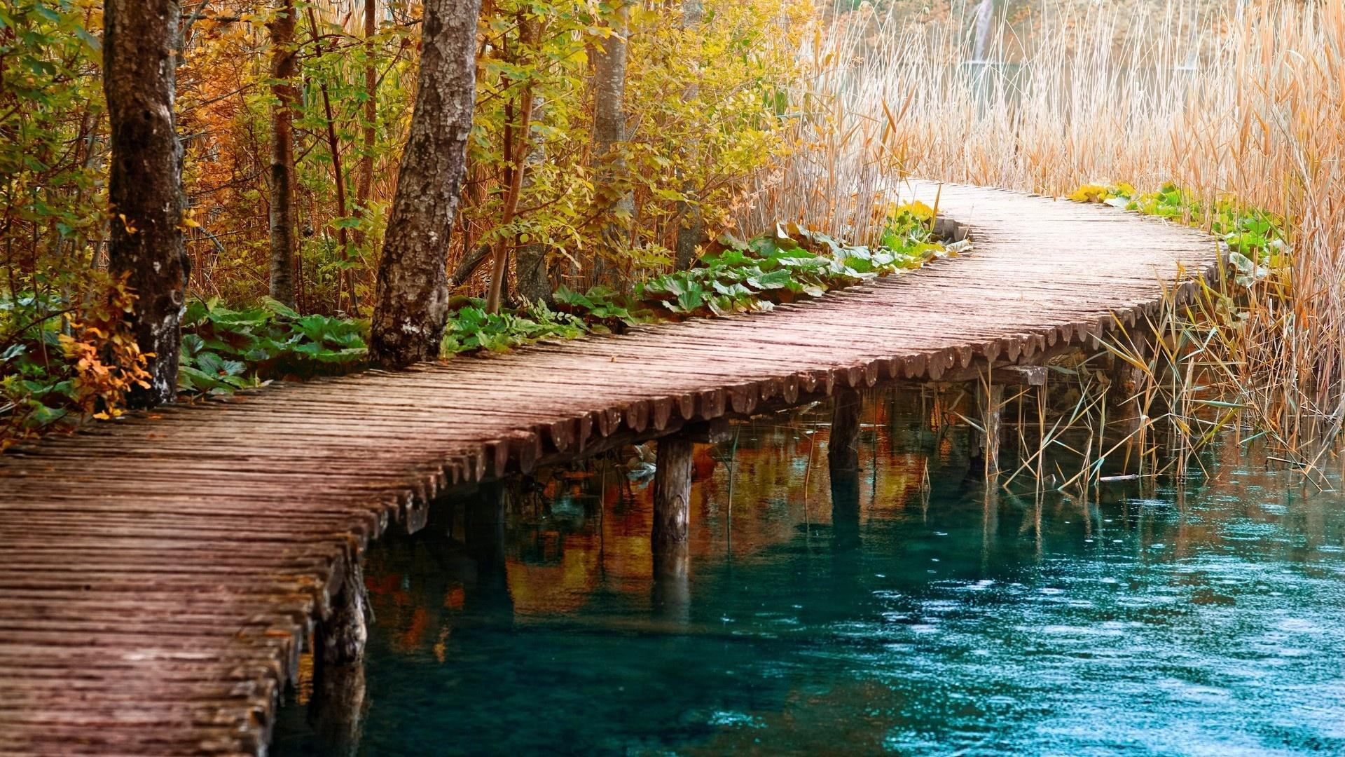 wooden path in forest hd wallpaper the truth of life